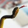 Serpent en plastique